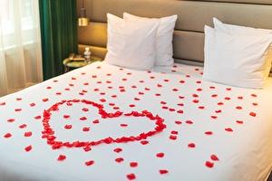Rose peddles on bed